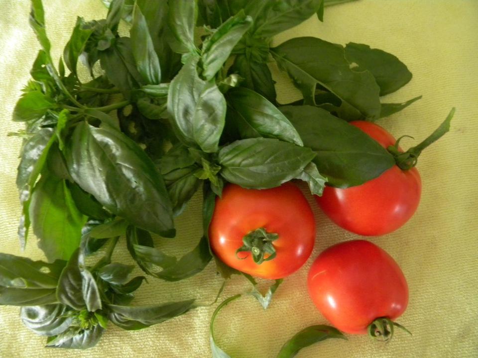 tomatoes_basil